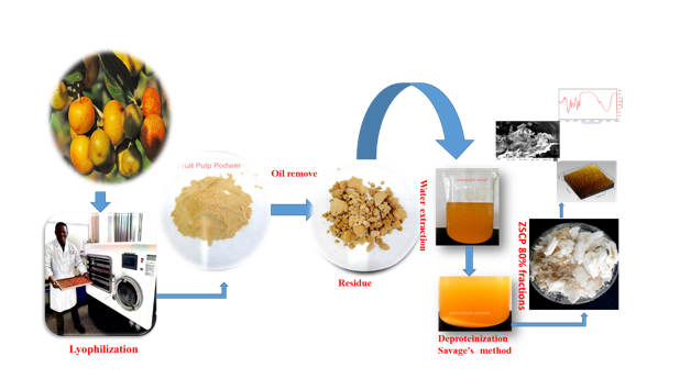 Characterization of chemical structure of water-soluble polysaccharides from Sudanese Ziziphus spina Christi fruits