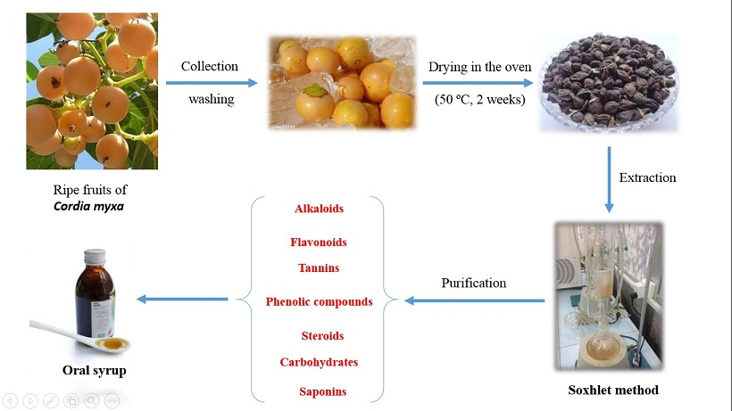 Comparing different extraction methods for oral syrup formulation of major bioactive compounds from Cordia Myxa fruit