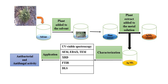 Biosynthesis and characterization of silver nanoparticles: A thymbra spicataL extract approach and study of their antibacterial and antifungal activity