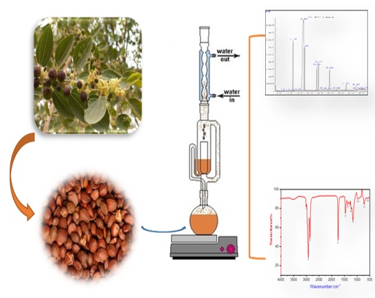 Phytochemical screening by using GC-MS and FTIR spectrum analysis of fixed oil from Sudanese Ziziphus spina Christi seeds