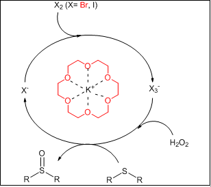 H2O2 as a green and environmentally benign reagent for the oxidation of Sulfides in the presence of {[K.18-Crown-6]X3}n (X= Br, I) compared with some other organic tribromides