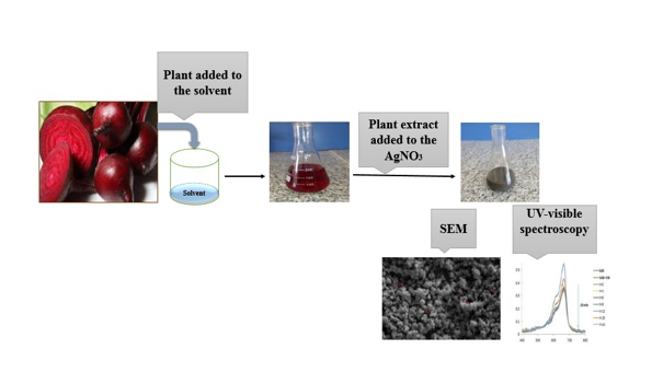 The Synthesis of silver nanoparticles using Beetroot extract and its antibacterial and catalytic activity